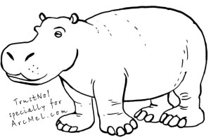 How to draw a hippopotamus step 4