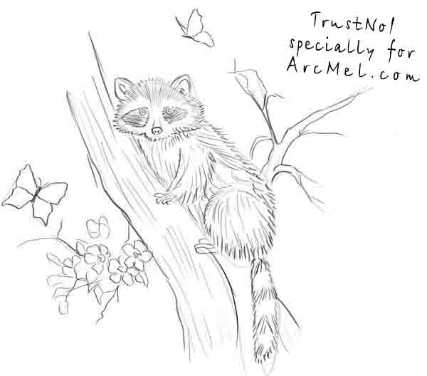 how to draw a raccoon step 4