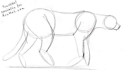How to draw cheetah step 2