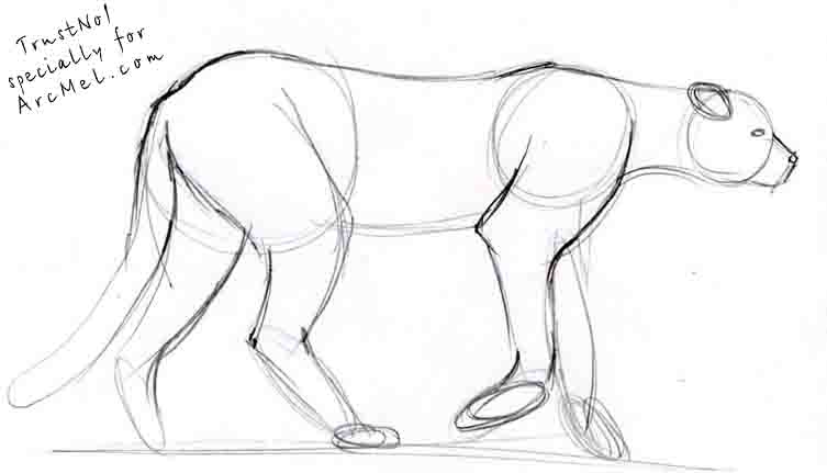How to draw cheetah step by step