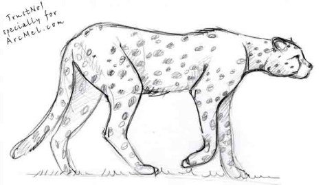 How to draw cheetah step 5