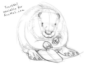 how to draw a beaver step 3