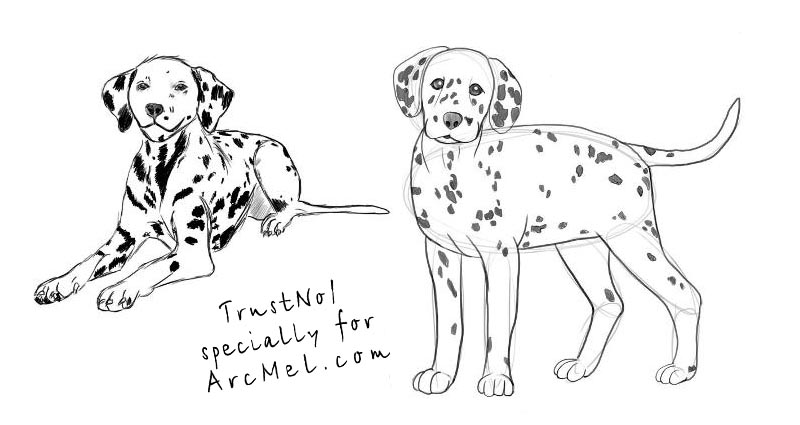 how to draw a dalmatian step 4
