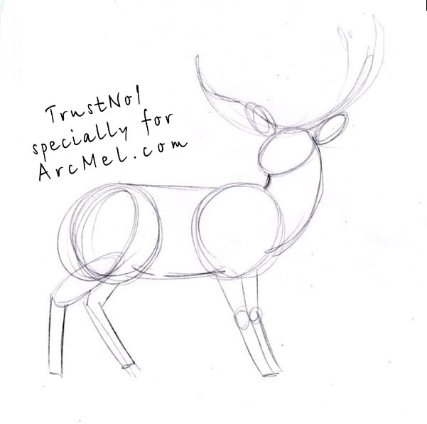 how to draw in deer