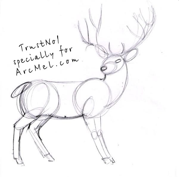 How to draw a deer step by step | ARCMEL.COM