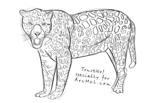 jaguar step by step coloring pages