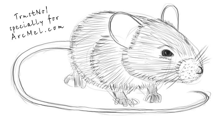 How to draw a mouse step by step | ARCMEL.COM Raccoon Drawing Easy