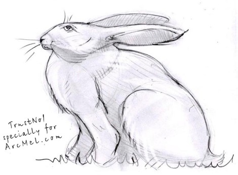 How to draw a rabbit step 5