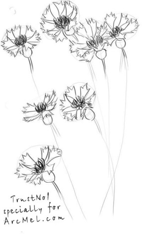 How to draw a cornflower step 3