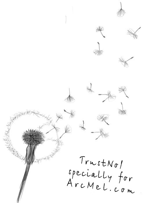 Dandelion Flower Line Drawing : How to draw a dandelion step by arcmel