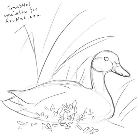 How to draw a duck step 3