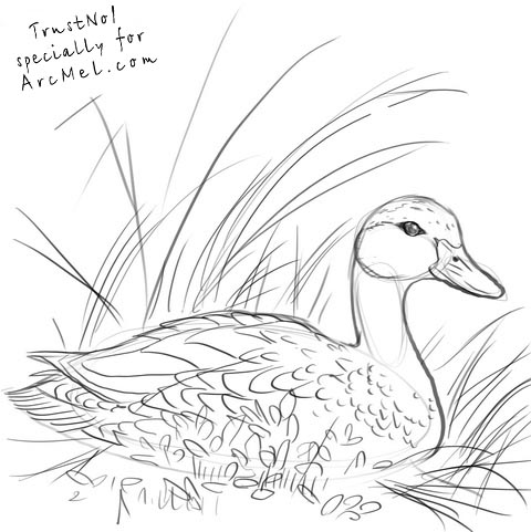 How to draw a duck step by step