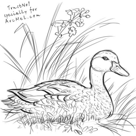 How to draw a duck step 5
