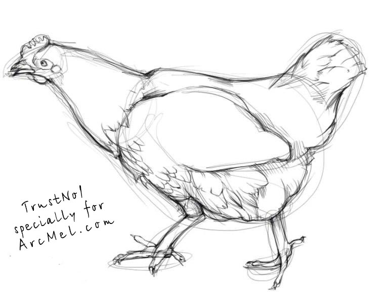 Line Drawing Hen : How to draw a hen step by arcmel