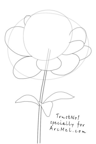 How to draw a peony step 3