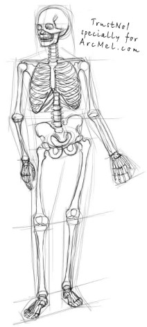 How to draw a skeleton step 3