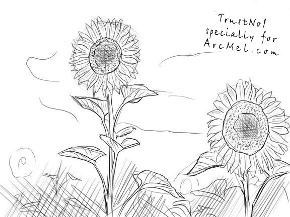 How To Draw A Sunflower Step 4 The Sunflowers