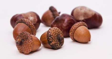 How to draw acorns step by step arcmel com for How to preserve acorns