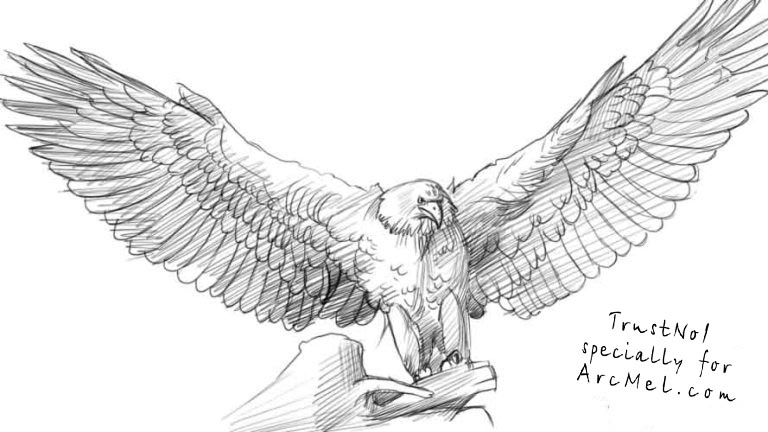 How to draw an eagle step by step | ARCMEL.COM