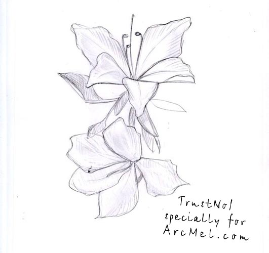 Orchid Flower Line Drawing : Related keywords suggestions for orchid flower drawings