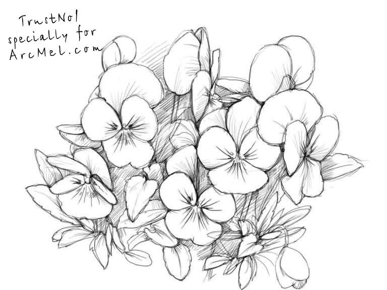 pansy flower drawing - photo #4