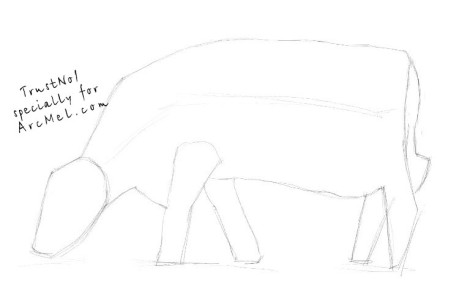 How to draw a cow step 1