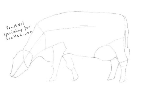 How to draw a cow step 2