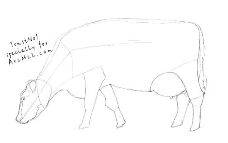 How to draw a cow step 3