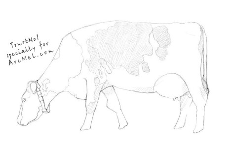 How to draw a cow step 4
