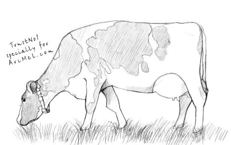 How to draw a cow step 5