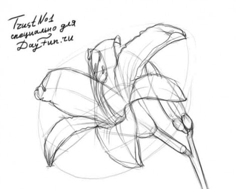 How to draw a flower step by step 3