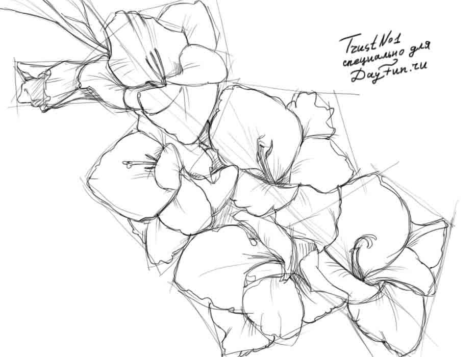 Gallery For gt Gladiolus Drawing
