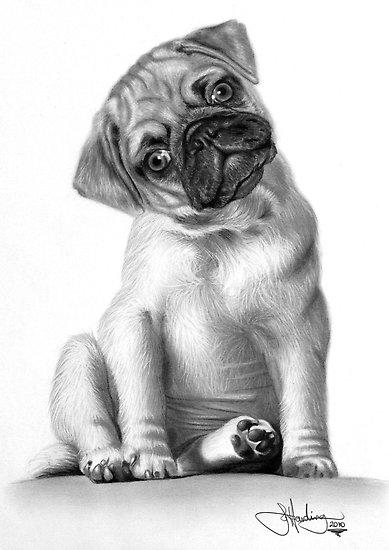 How to draw a puppy step by step | ARCMEL.COM
