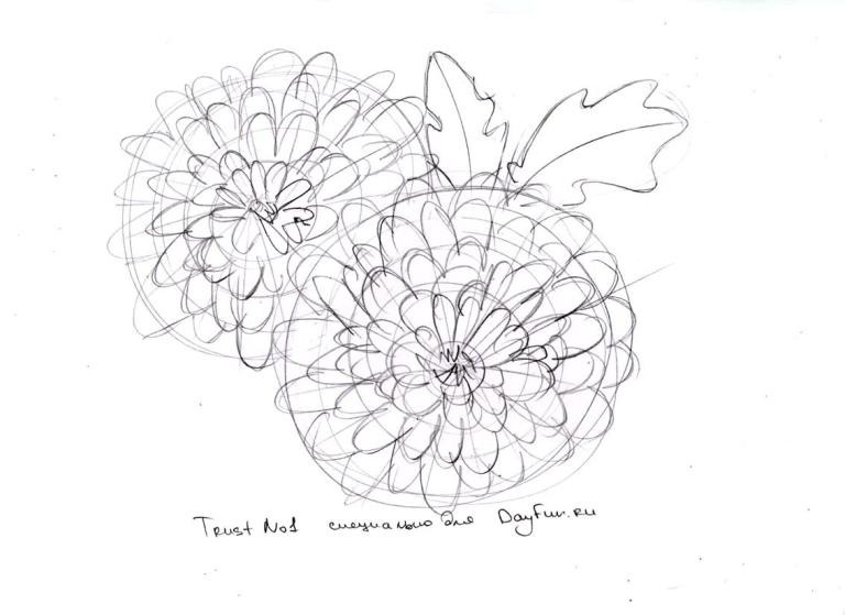 Chrysanthemum Flower Line Drawing : How to draw chrysanthemums step by arcmel