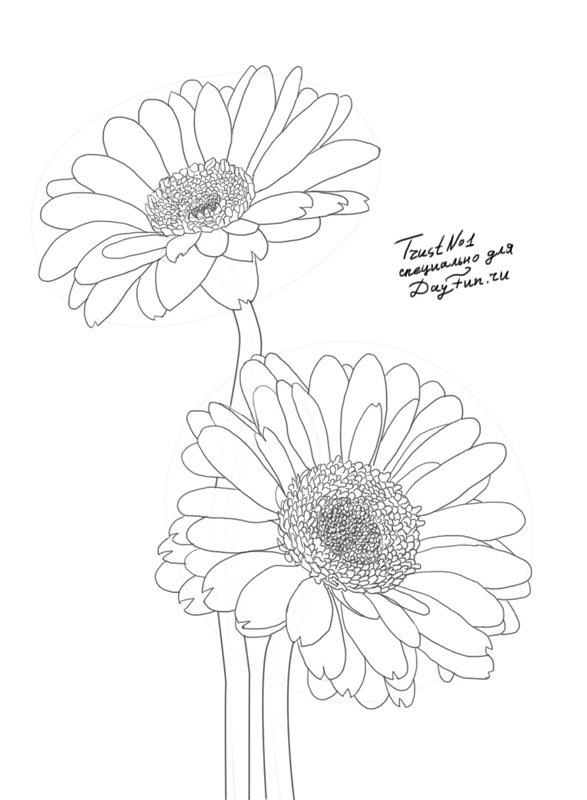 Daisy Flower Line Drawing : Gerber daisy free colouring pages