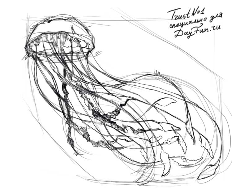 It is an image of Gratifying Jellyfish Line Drawing