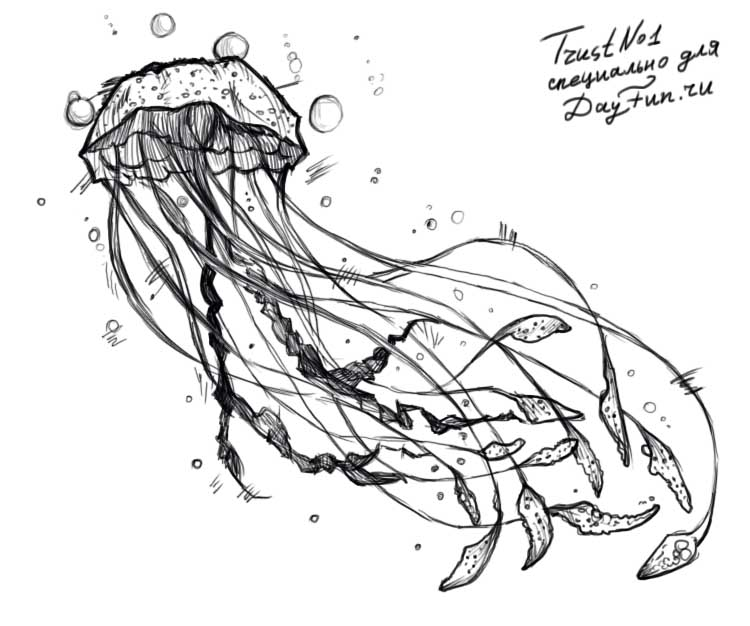 how to draw jellyfish step by step 4