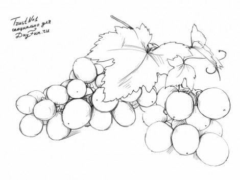 How to draw grapes step by step 5