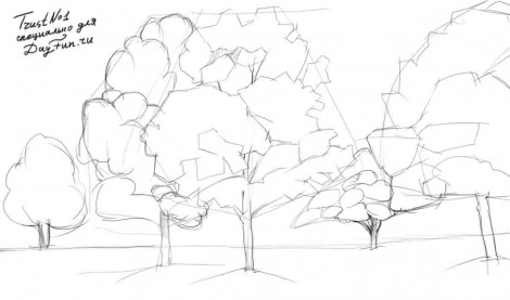 Maple Tree Drawing How to Draw a Maple Tree Step