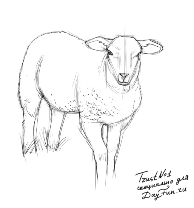 How To Draw A Sheep Step By Step