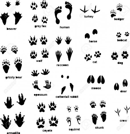 How to draw a footprint animal