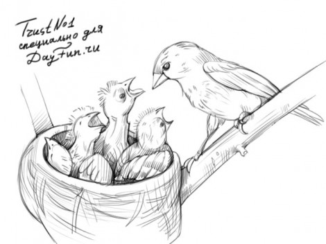 how to draw a nest step by step 4