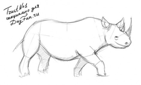 How to draw rhino step by step 3