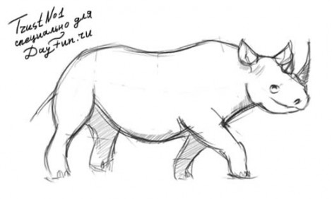 How to draw rhino step by step 4