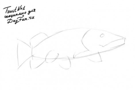 how to draw a pike fish step by step 1