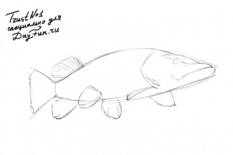 how to draw a pike fish step by step 2