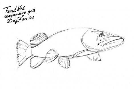 how to draw a pike fish step by step 3
