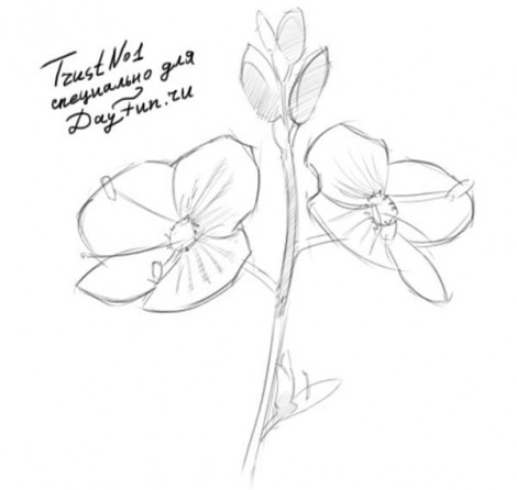 how to draw forget-me-nots flowers 4