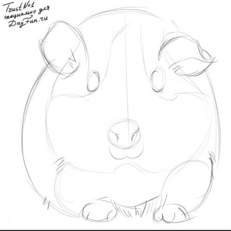 how to draw guinea pig step by step 2