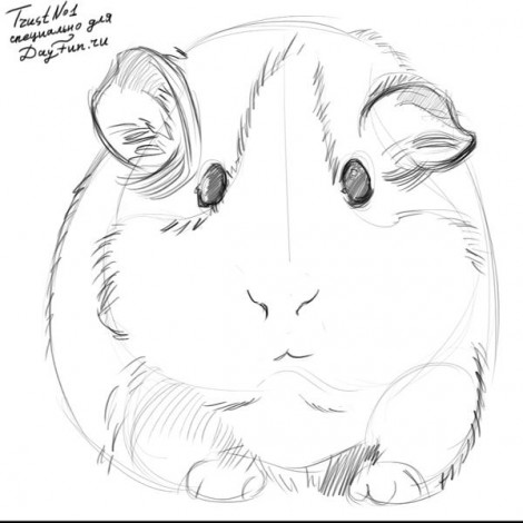how to draw guinea pig step by step 3